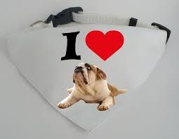 Kutyakendő nyakörvvel